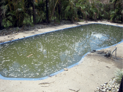 A residential inground swimming pool completely filled with muddy water and floating debris.