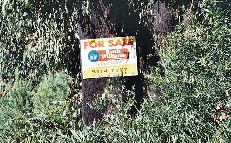 A For Sale sign is pinned to a tree.