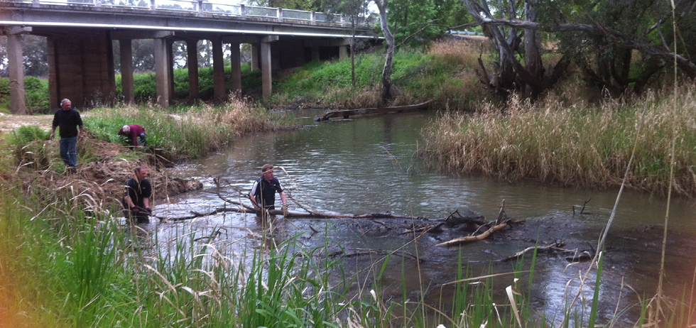 A photo of a Carisbrook creek, with a road overpass in the background. Four residents are clearing debris from the creek.