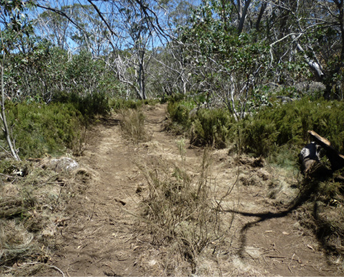 Photo of a fire trail (the containment line) in bushland.
