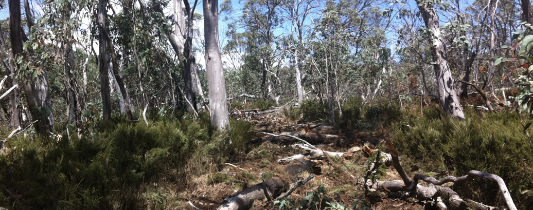 Photo of bushland, showing logs scattered over the containment line so that it barely visible as a trail.