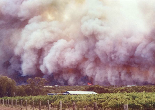 Image of a bushfire burning in the distance, viewed from across a vineyard. The sky is extremely smoky as a result of the bushfire.